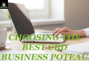 choosing best cbd business