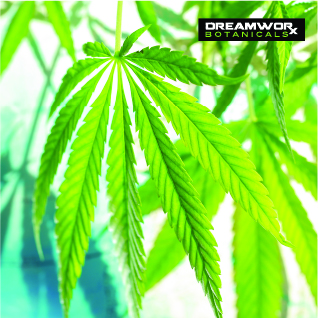 Shop CBD Fort Worth - Where To Get CBD Products - DreamWoRx CBD Shop Fort Worth - Where To Get DreamWoRx CBD Products Fort Worth