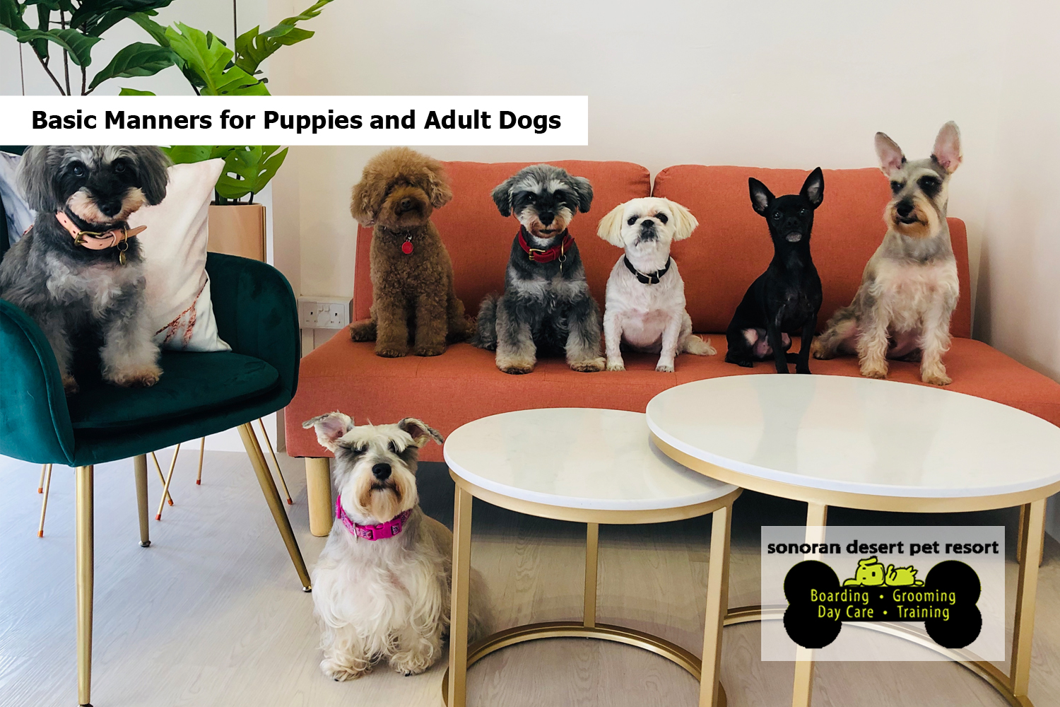 Basic Manners for Puppies and Adult Dogs