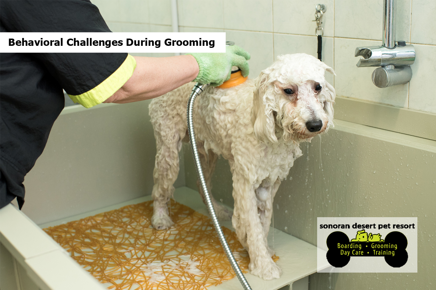Behavioral Challenges During Grooming