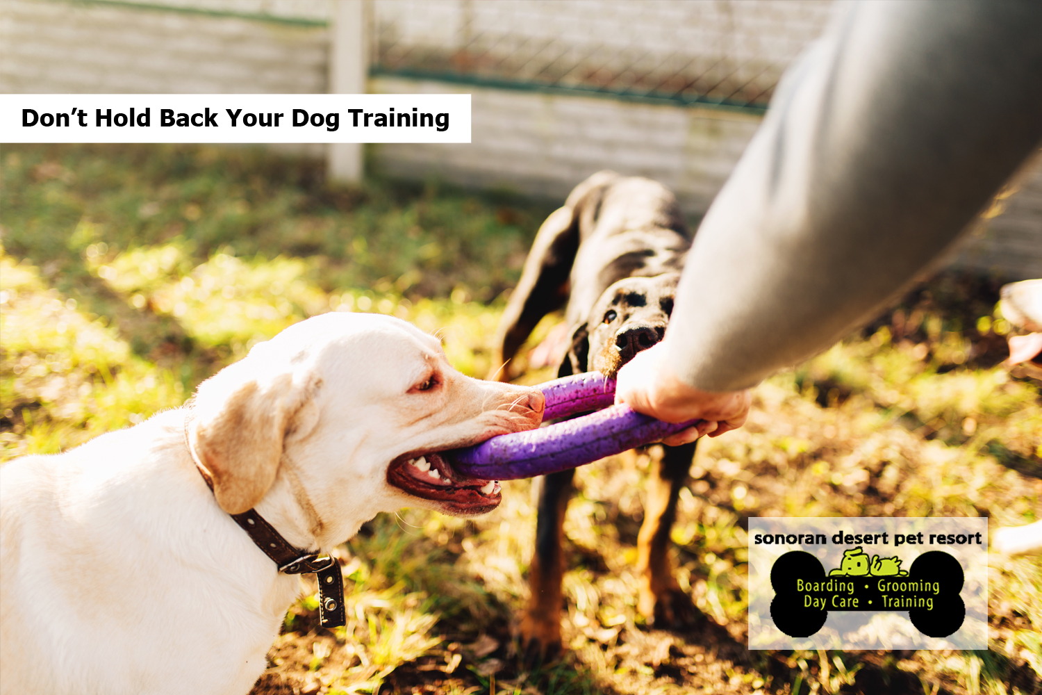 Don't Hold Back Your Dog Training