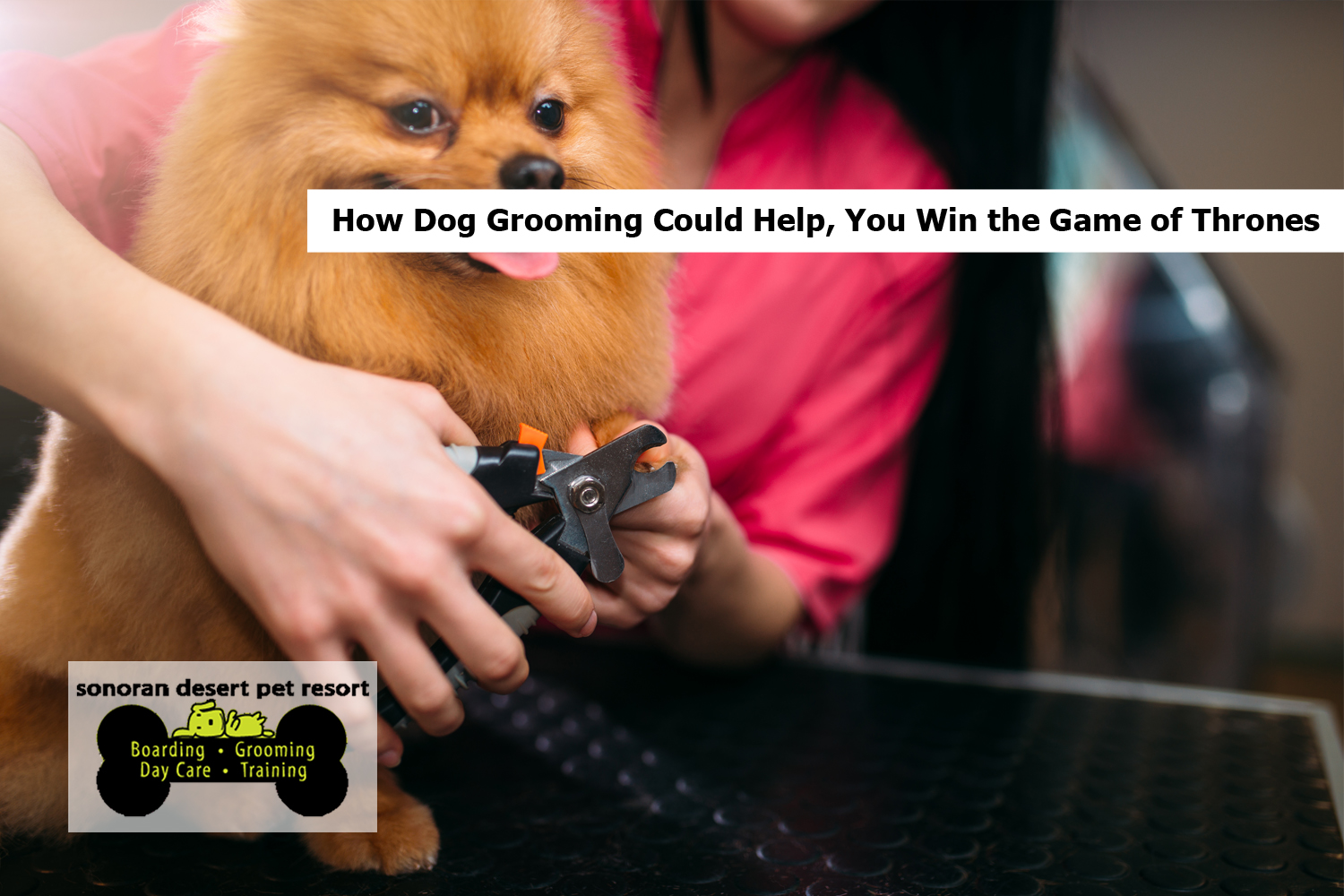 How Dog Grooming Can Keep You from Marrying the Wrong Person