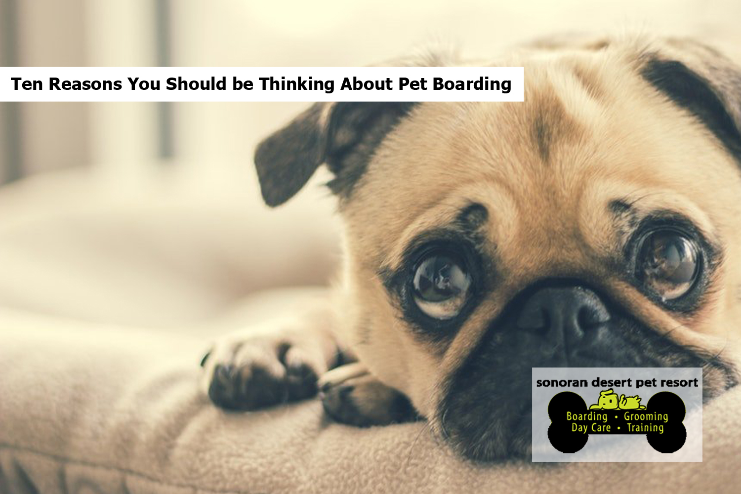 Ten Reasons You Should be Thinking About Pet Boarding