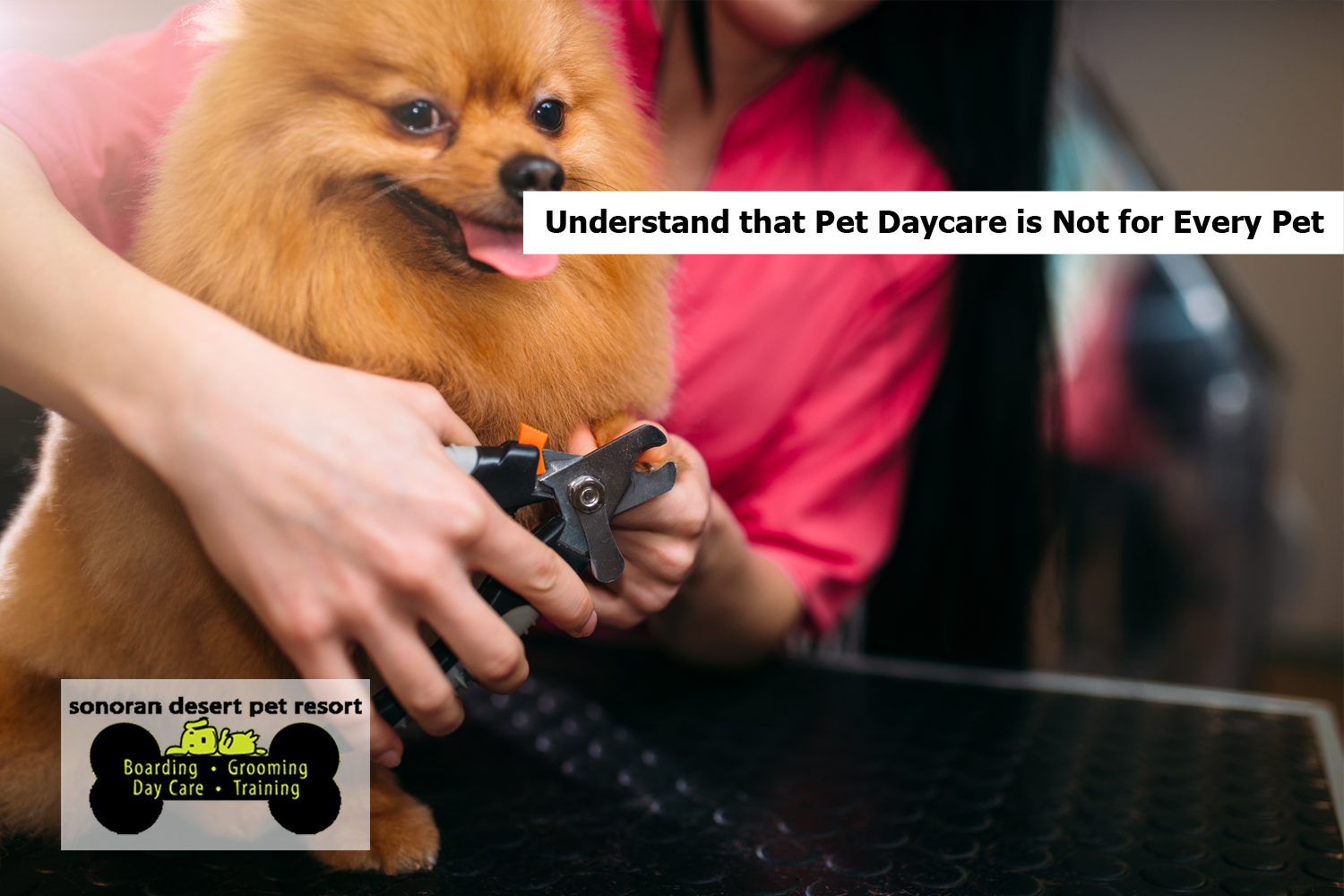 Understand that Pet Daycare is Not for Every Pet