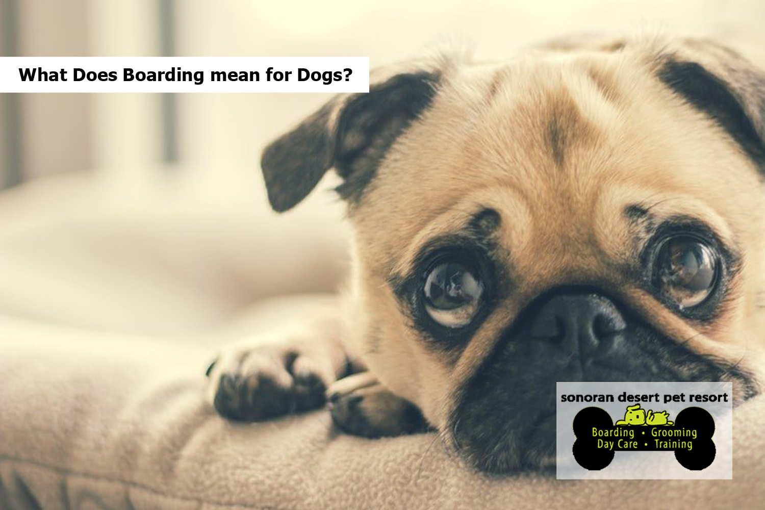 What Does Boarding mean for Dogs?