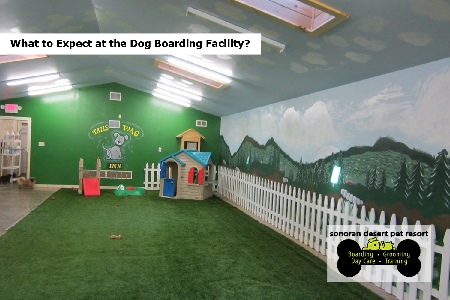 What to Expect at the Dog Boarding Facility?