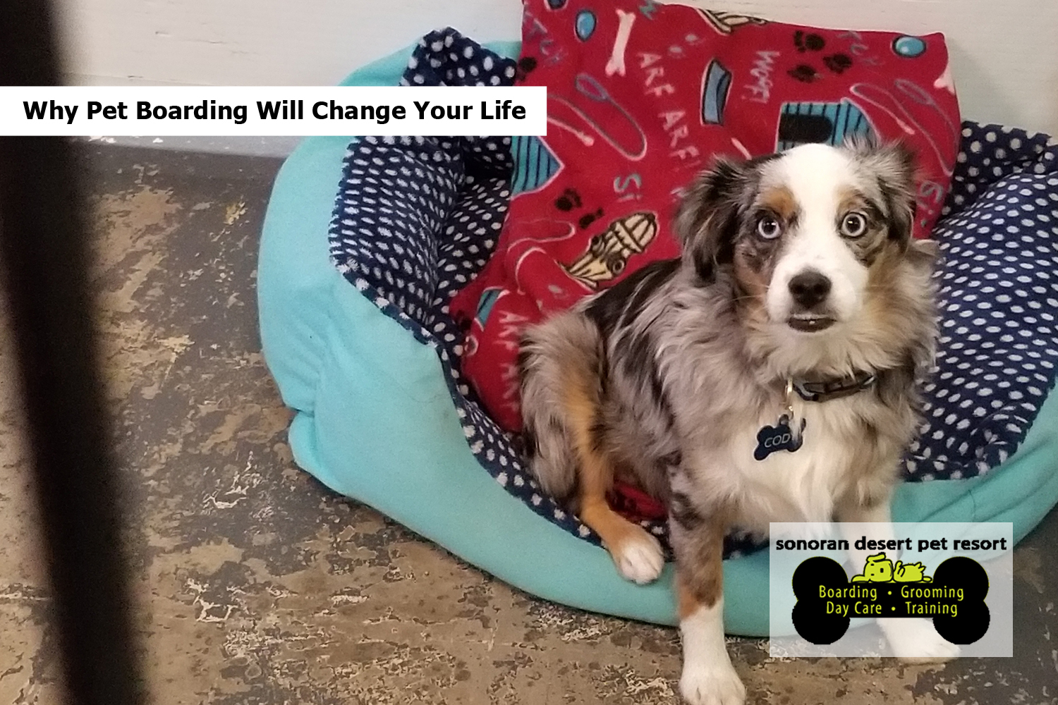 Why Pet Boarding Will Change Your Life