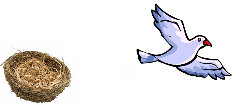 Empty Nest? Freebird!