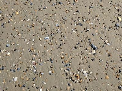 Ladies Weekend Seashells