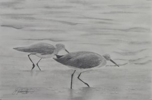Pencil drawing, shorebirds, California coast