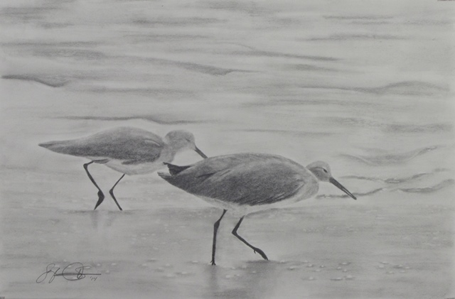 Pencil drawing, shorebirds, California coast