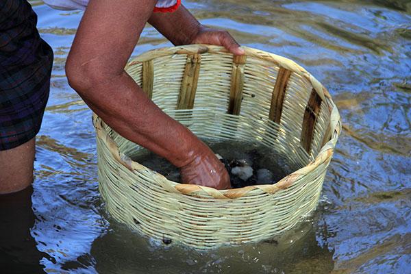 washing wool in a basket