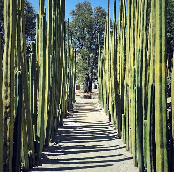 Botanical garden in Oaxaca