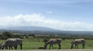 KENYA-2017-60