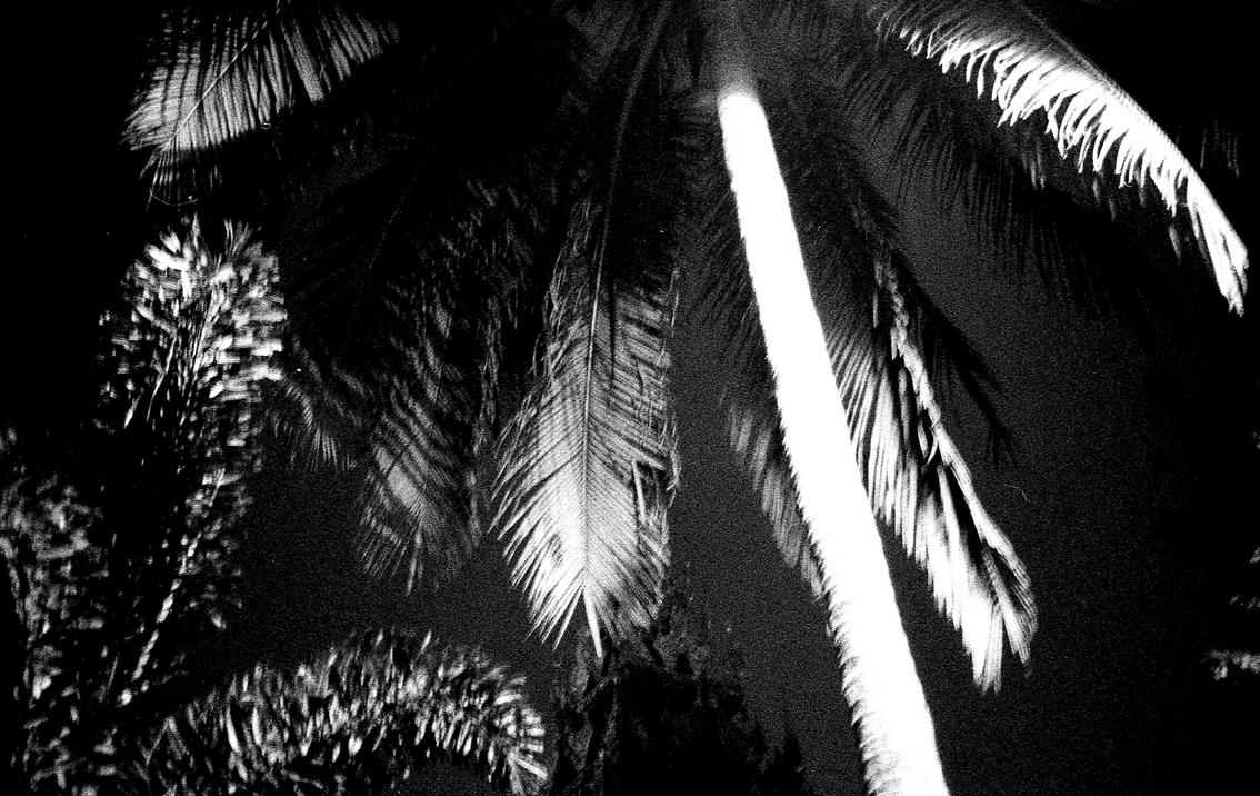 Palmiers myanmar