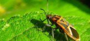 Bugs: Still a Nuisance, Still a Necessity
