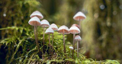 Today's Special: Meth, Mushrooms and Marijuana