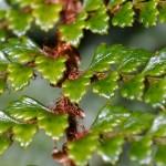 plastic-like tree leaves