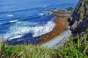 Huge Sea kelp growing near the shore