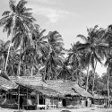 Grass huts and Palm Trees, Lombok Indonesia