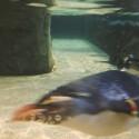 Underwater Penguin
