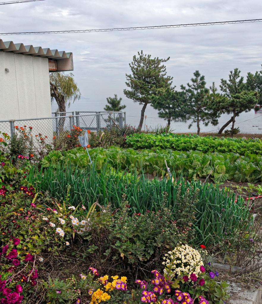 Garden by Lake Biwa