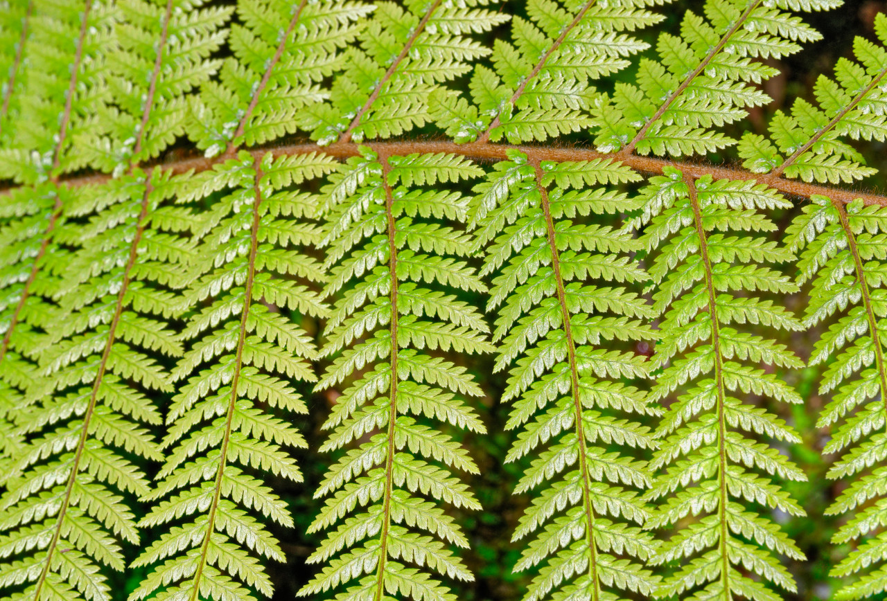 Closeup photo of fern leaf