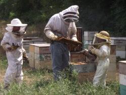 Beehives, honey