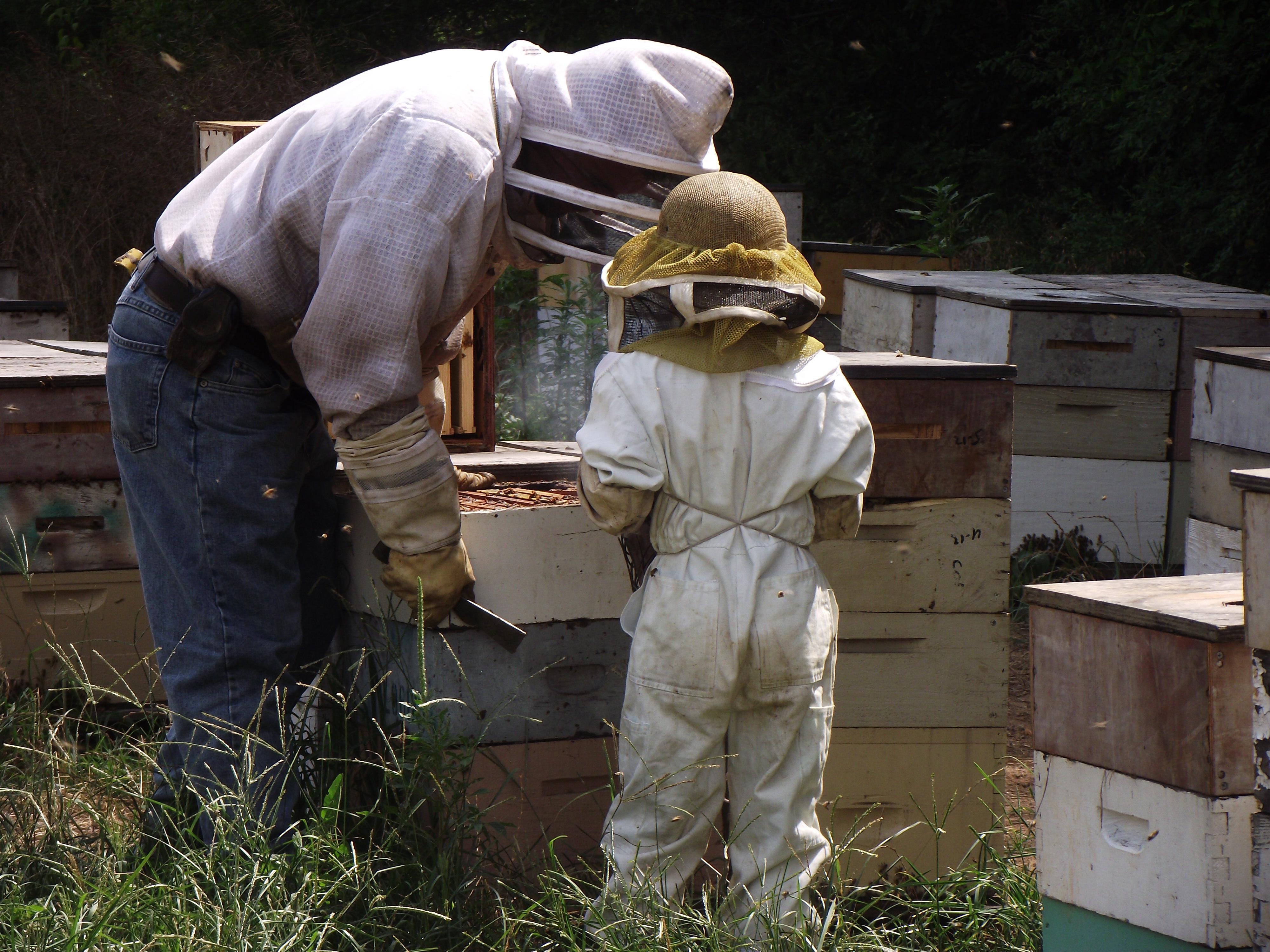 Raw Honey, Local Honey, Honeybees