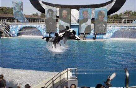 SeaWorld acknowledges planting worker in animal rights group