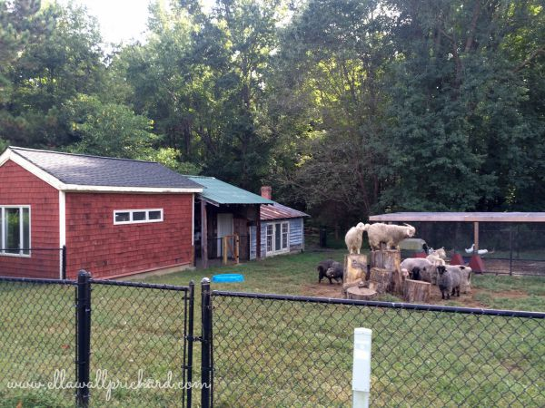 Peace Hill chicken coop