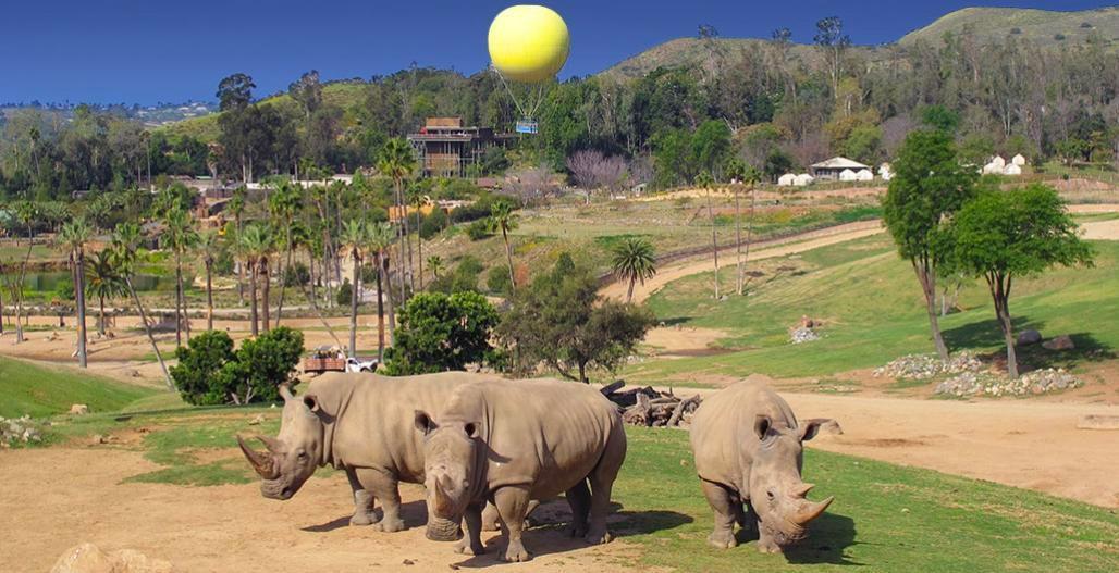 San Diego Zoo Safari
