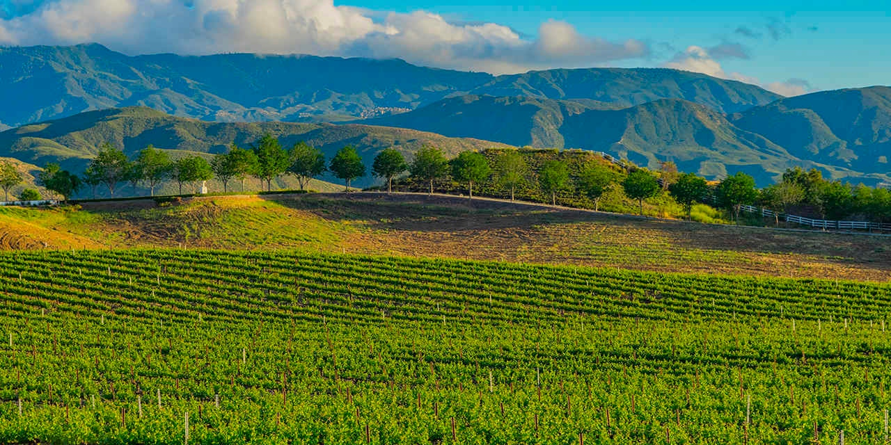 Wineries of Temecula Valley