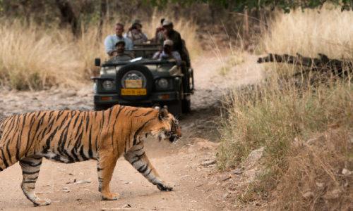 Ranthambore Wildlife Rajasthan tour1