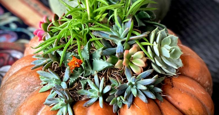 Succulent Topped Pumpkin Centerpiece