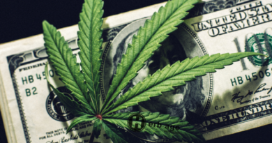 The Cannabis Job Market Has More Options Than You Think