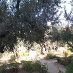 On the Mount of Olives.