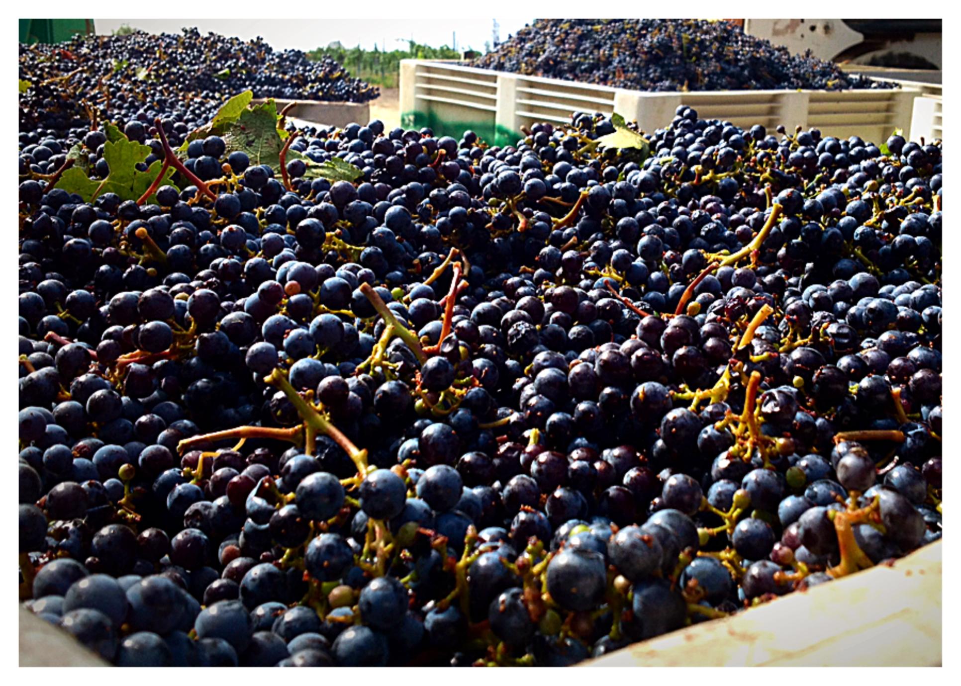 Cab Harvest