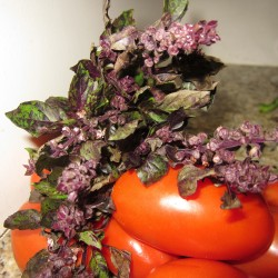 Gorgeous Green and Purple Basil
