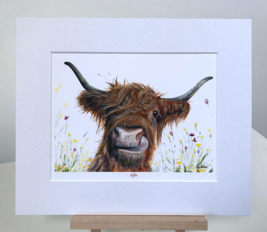 Alfie Highland Cow Pankhurst Gallery