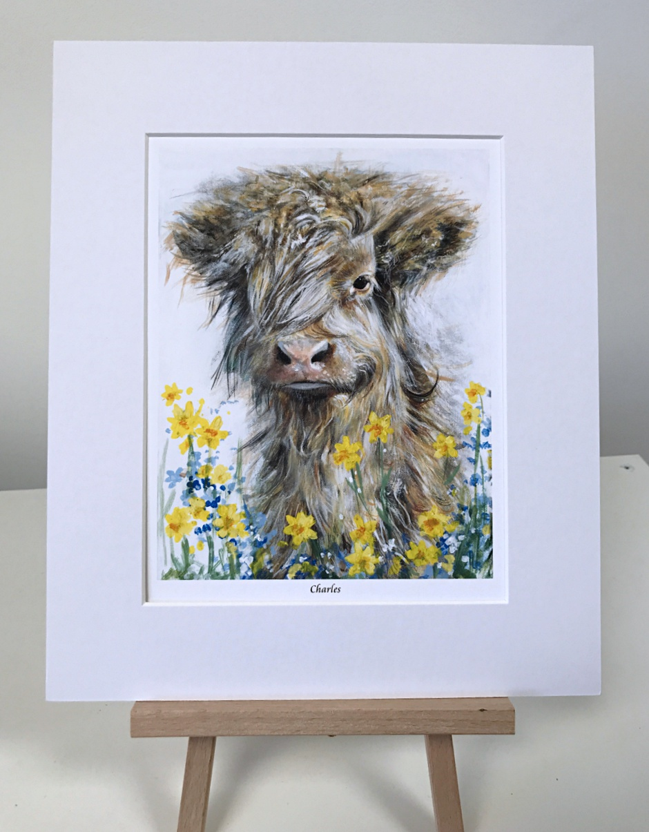 Charles highland cow Pankhurst Gallery