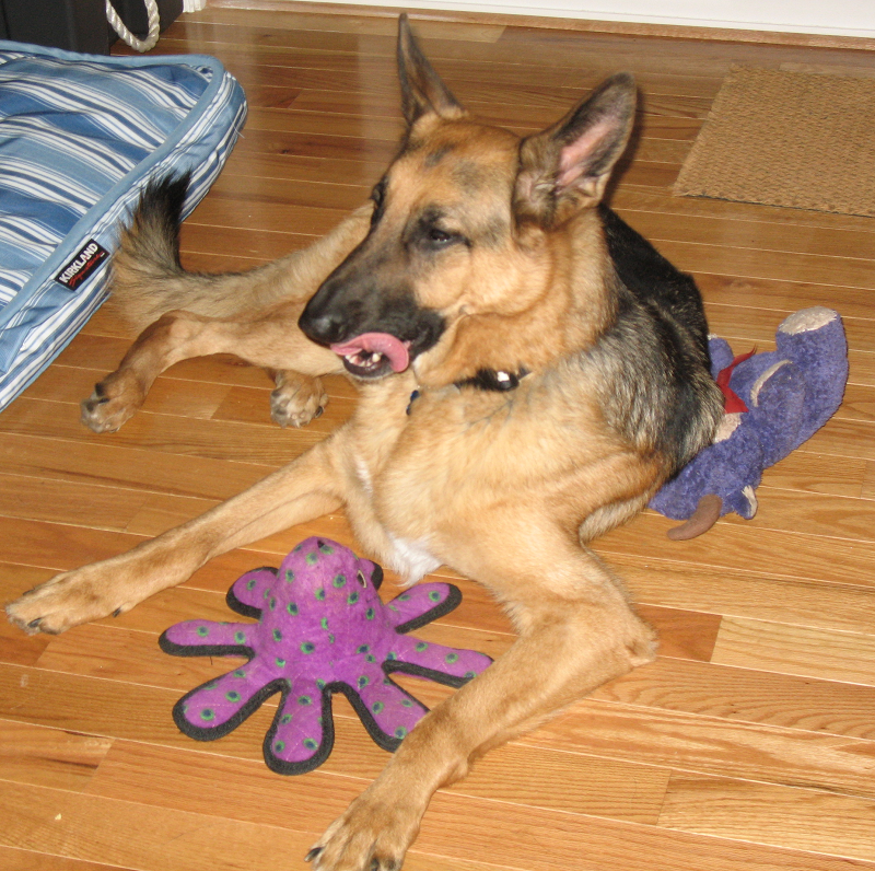 Mickie and Octopus Pal