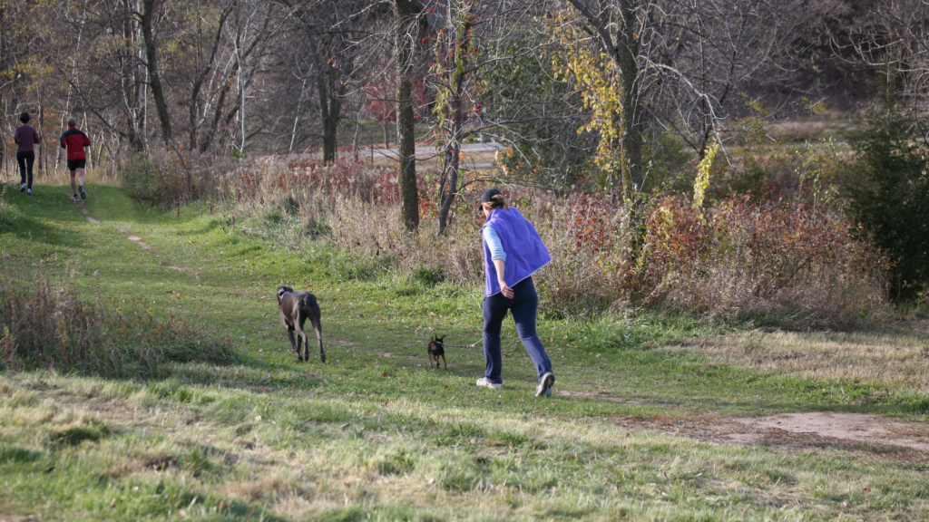 Power walking with your dog