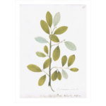 Remastered 18th C. Swedish Botanicals $650 | Paloma & Co.