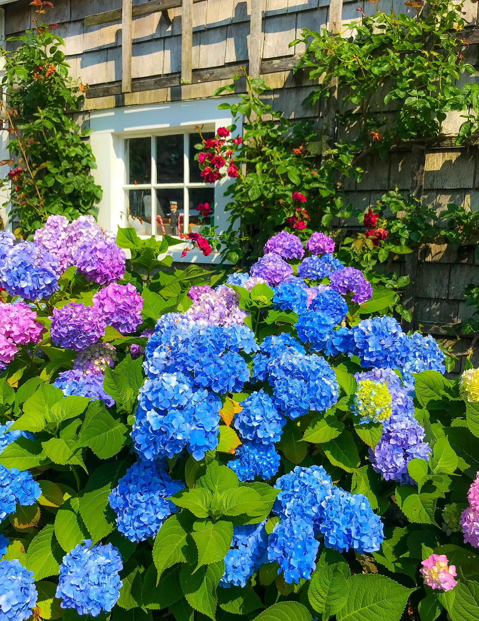 Hydrangea Tips and Tricks-10