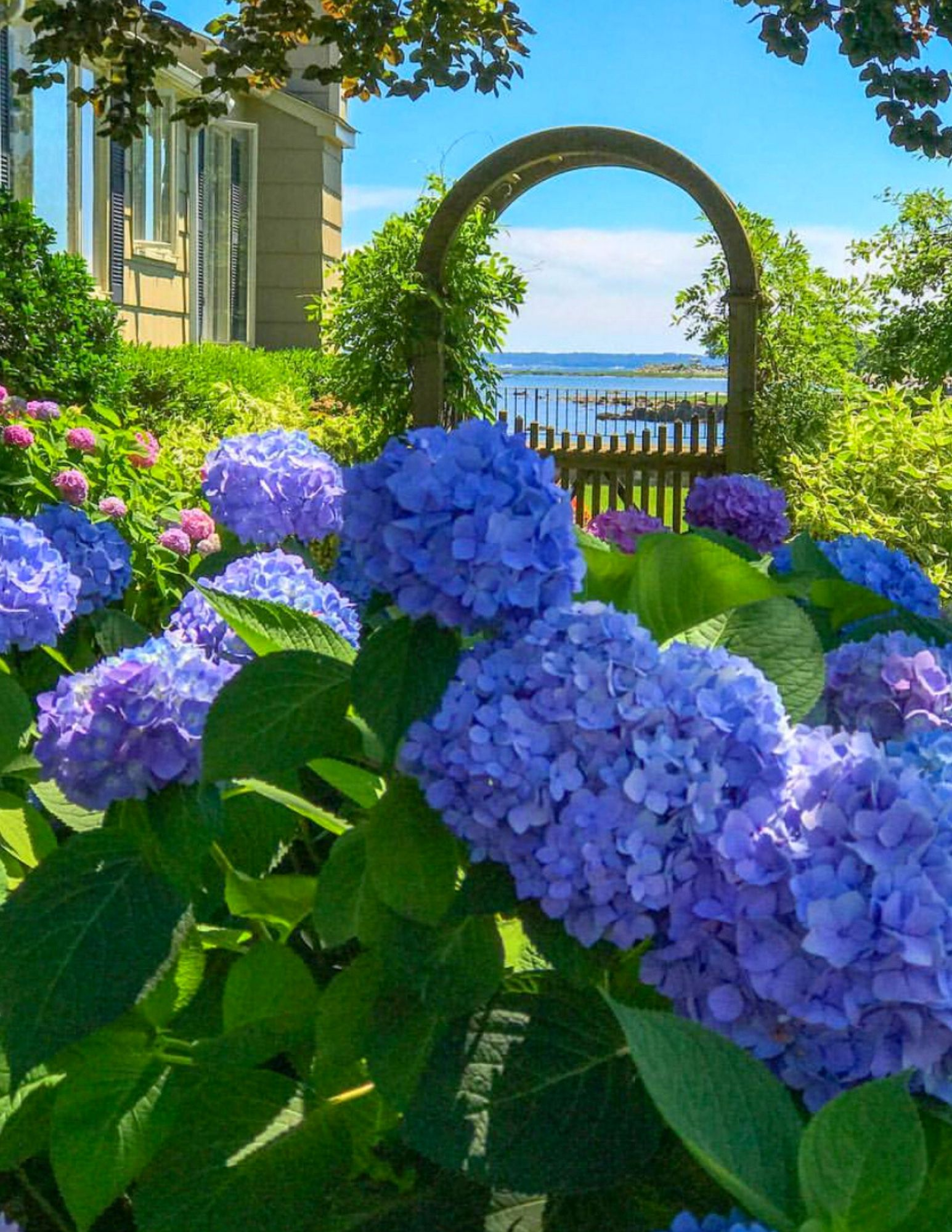 Hydrangea Tips and Tricks-2