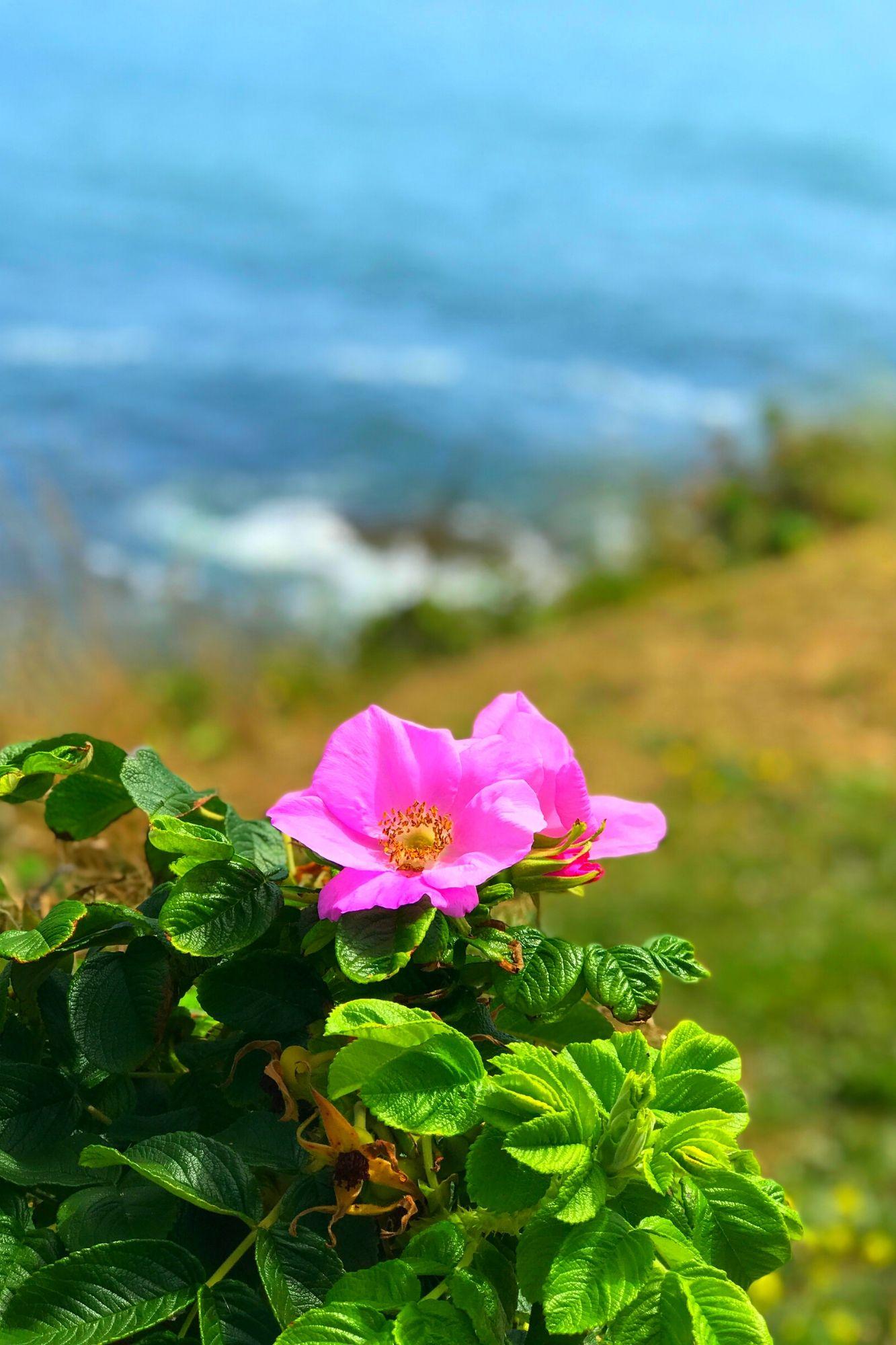 Cliff Walk in Newport Rhode Island-13