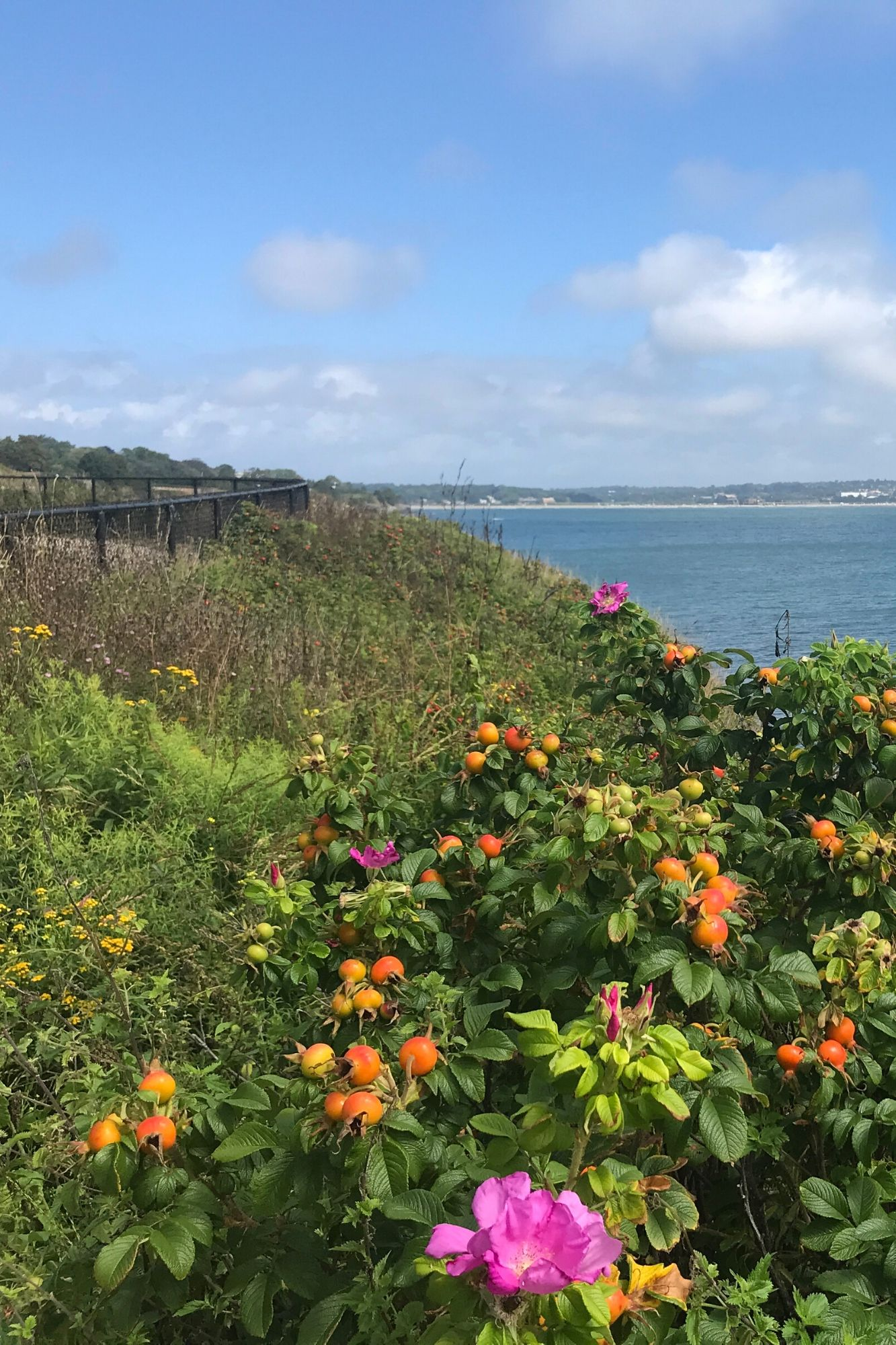 Cliff Walk in Newport Rhode Island-16