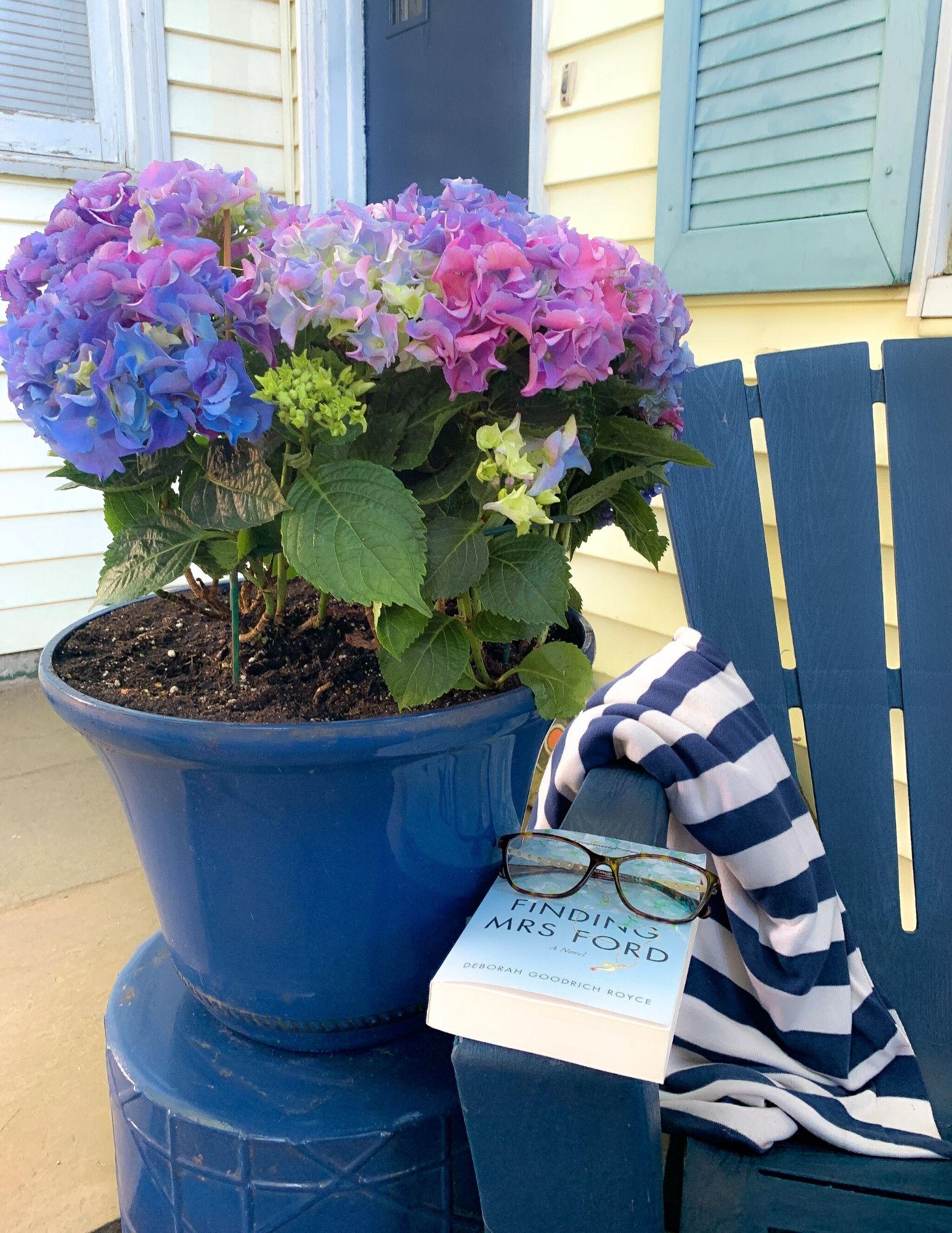 How to Plant Hydrangeas in Pots-23