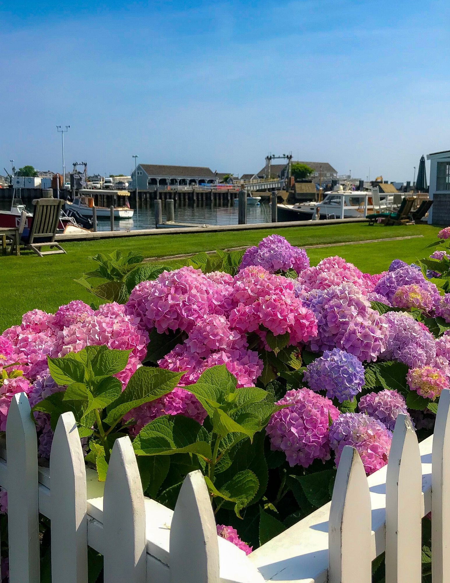 Nantucket Hydrangeas-20